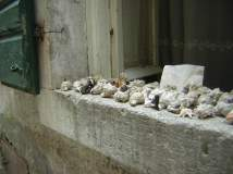 Selling sea shells on the windowsill in Kotor