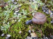 There were snails everywhere!!