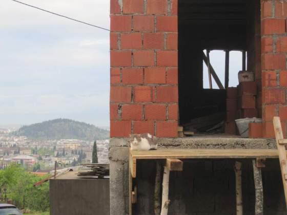 Podgorica Cat